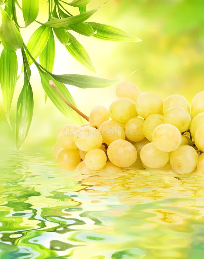Druiven die in water worden weerspiegeld royalty-vrije stock foto