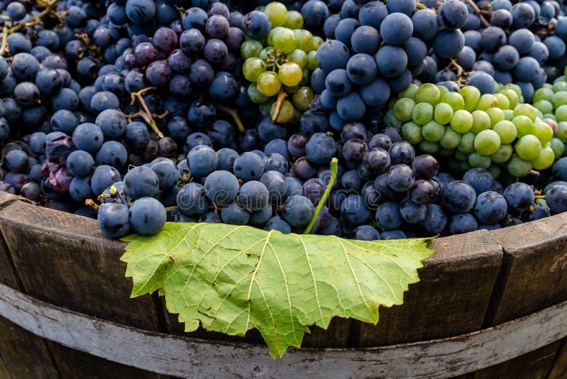 Druiven in een vat na het oogsten stock fotografie