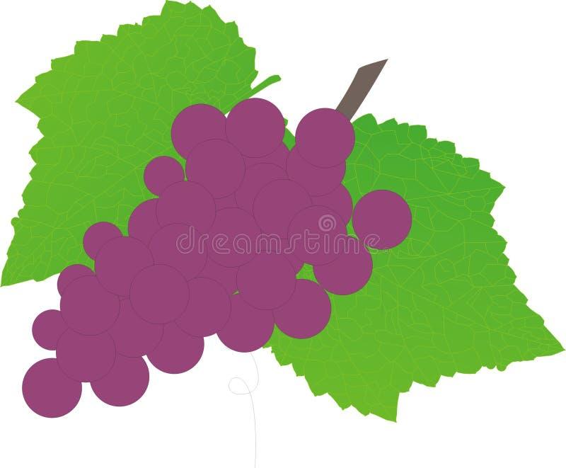 Druiven met druivenbladeren stock afbeeldingen
