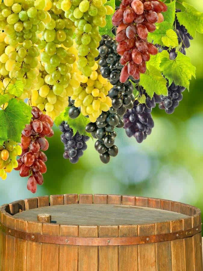 Druiven op een vat op een groene achtergrond royalty-vrije stock foto's