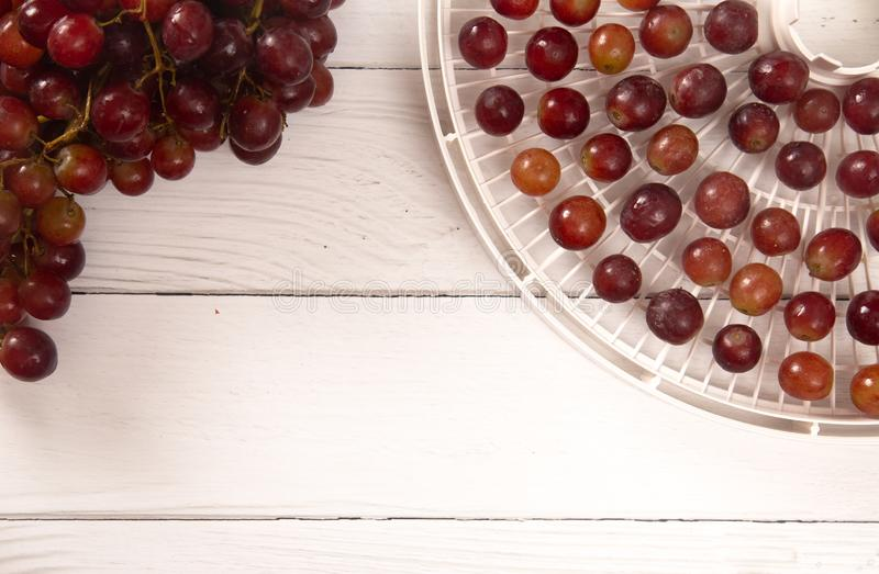 Druiven op Tray Being Prepared om in Rozijnen te ontwateren stock foto