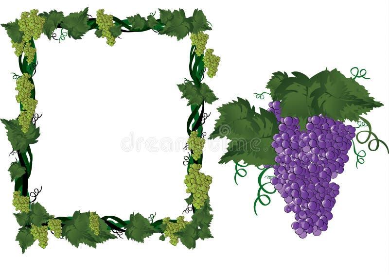 Druiven op wijnstok in frame stock illustratie