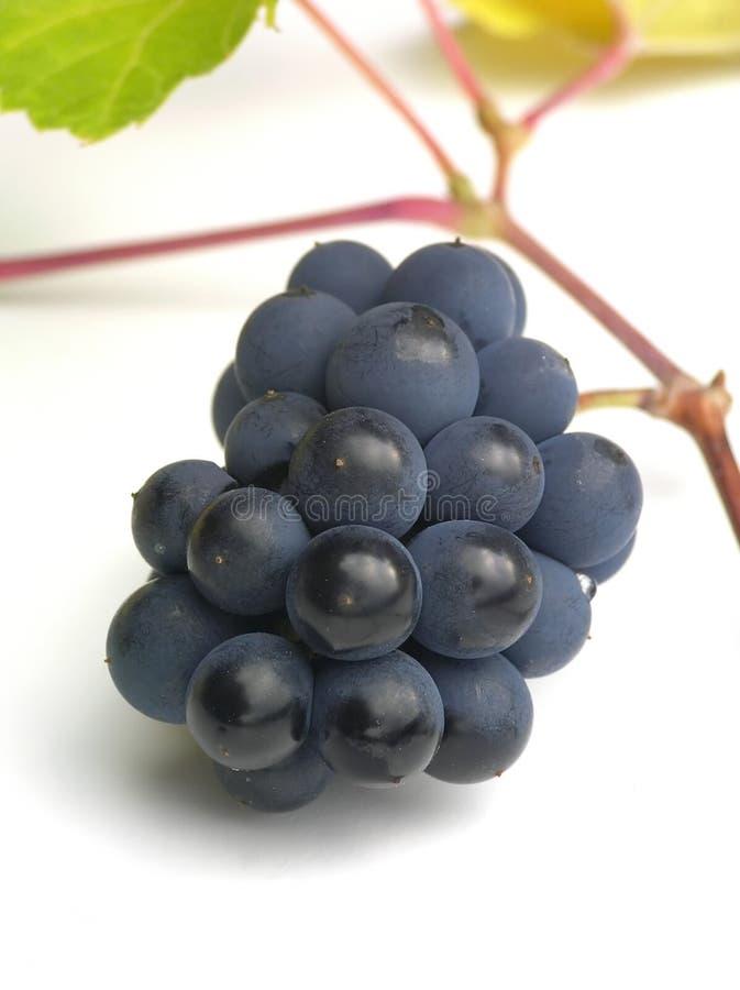 Druiven op witte lijst stock afbeelding