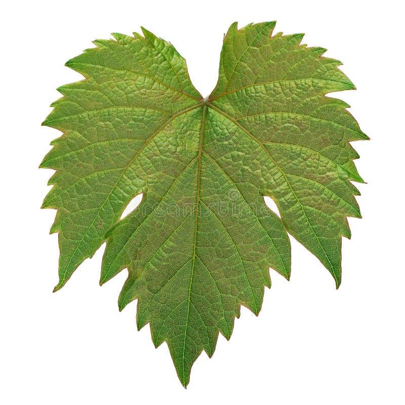 Druivenblad colseup royalty-vrije stock afbeelding