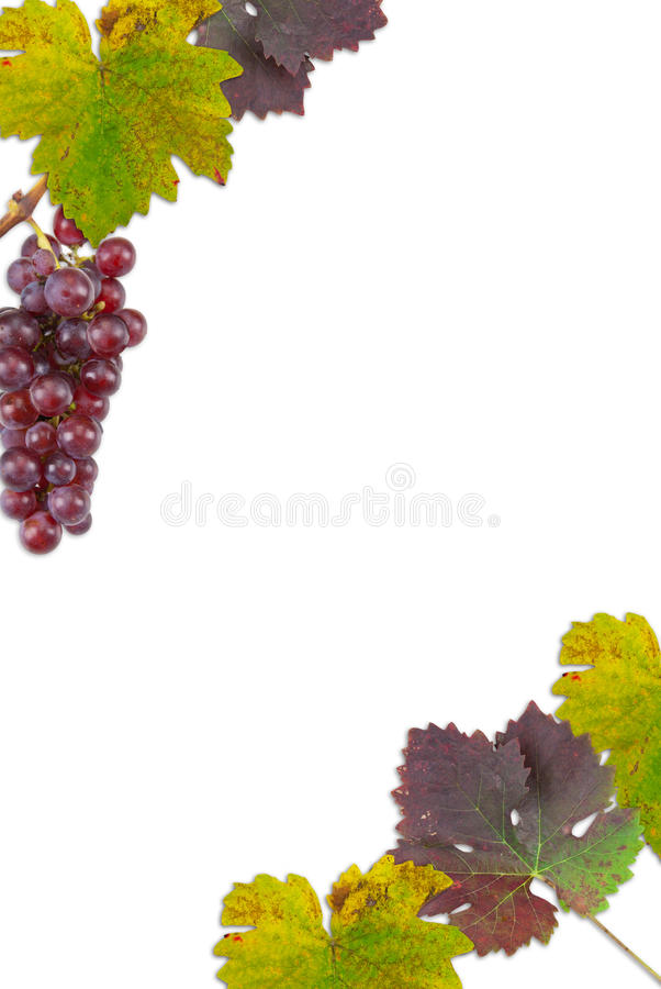 Druivenbladeren royalty-vrije stock foto
