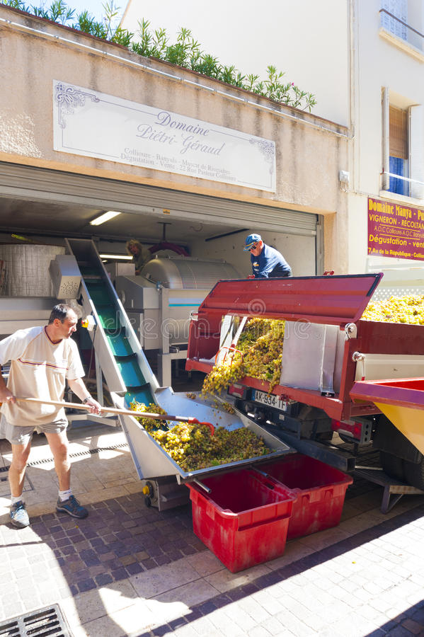 Druivenkippenren Collioure
