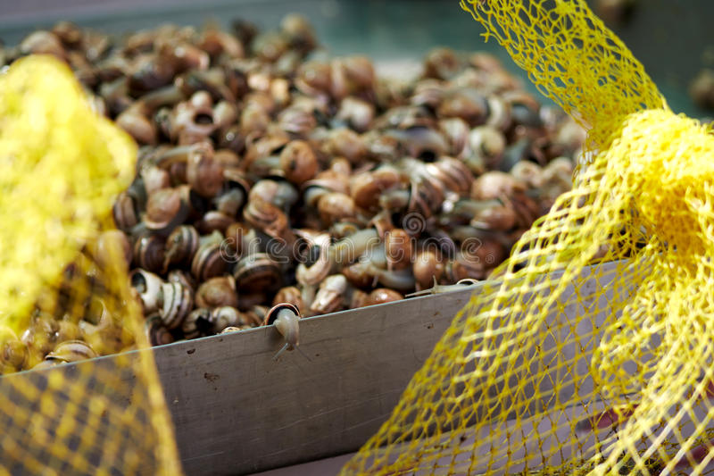Druivenslakken stock afbeeldingen