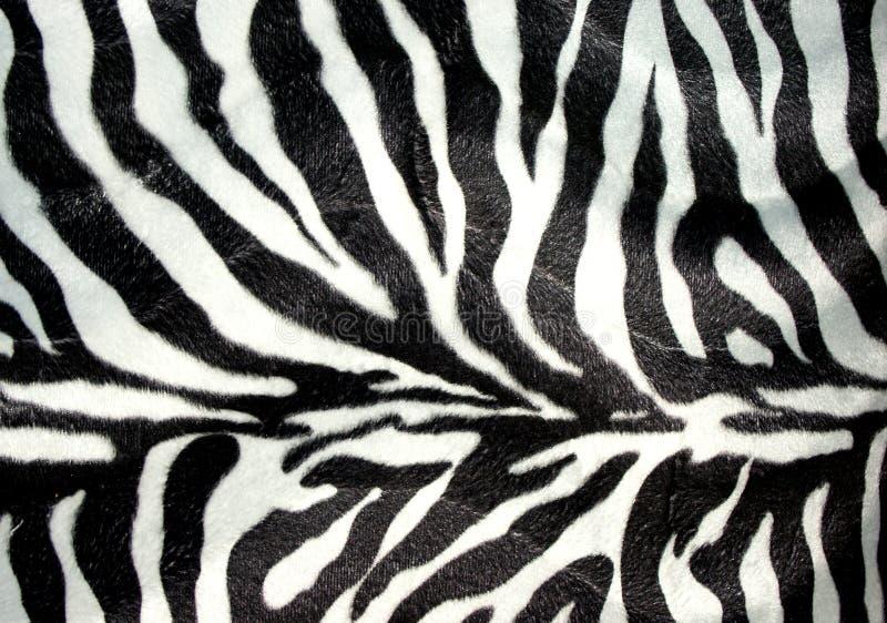 druk zebra royalty ilustracja