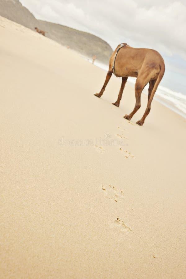 Druki na plaży zdjęcie stock