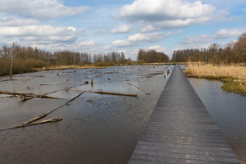 Drunknad skog i Nederländerna arkivfoton