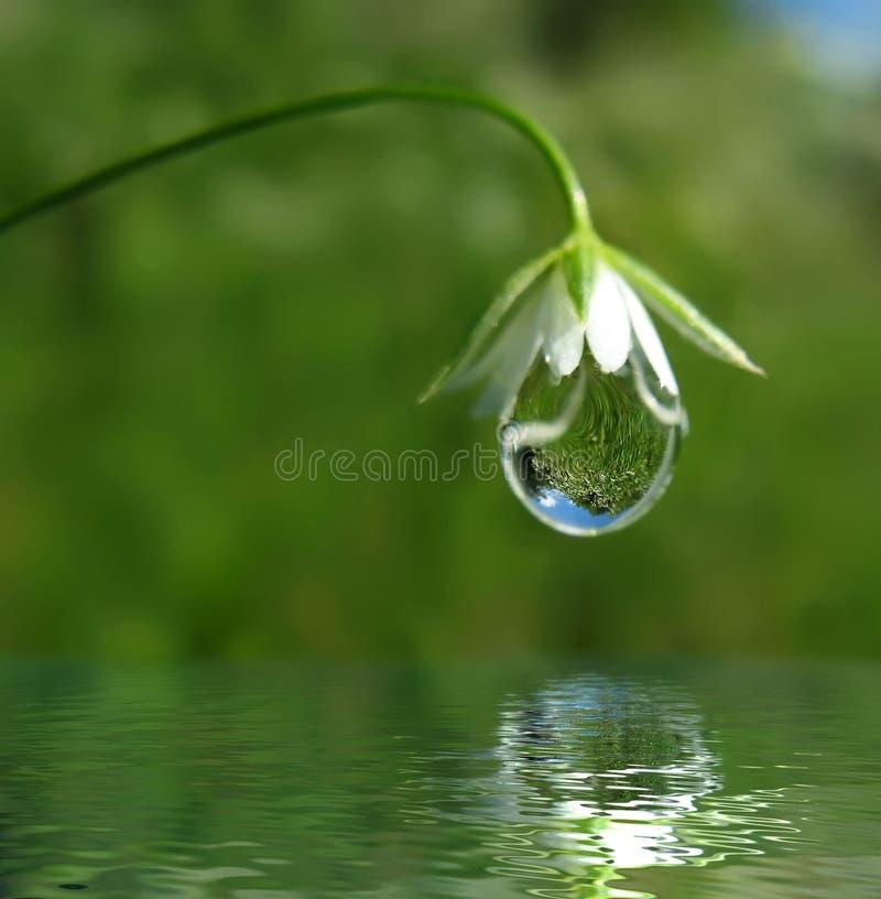 Druppeltje op bloem stock afbeeldingen