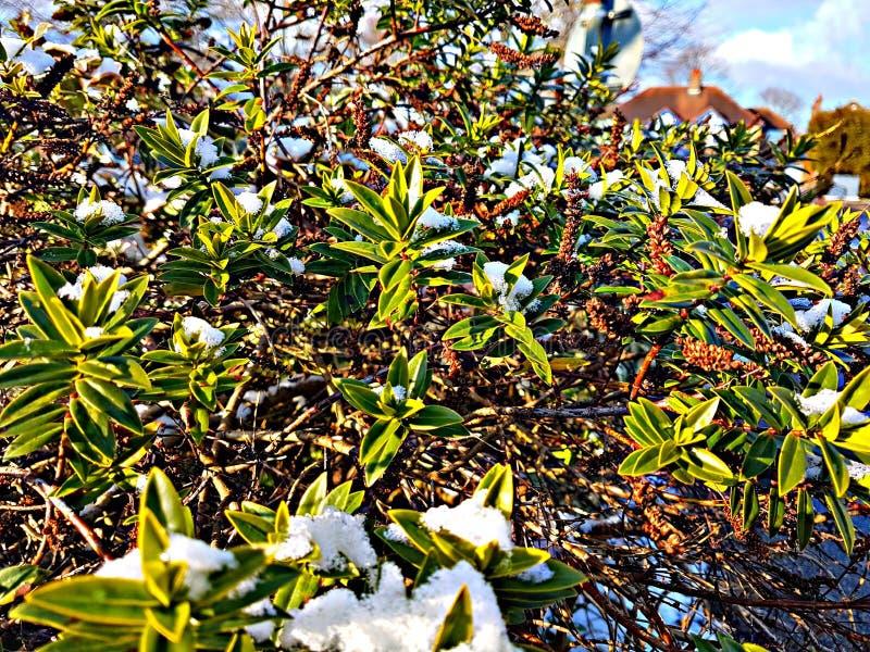 Druppeltjes van Maart-Sneeuw royalty-vrije stock afbeelding