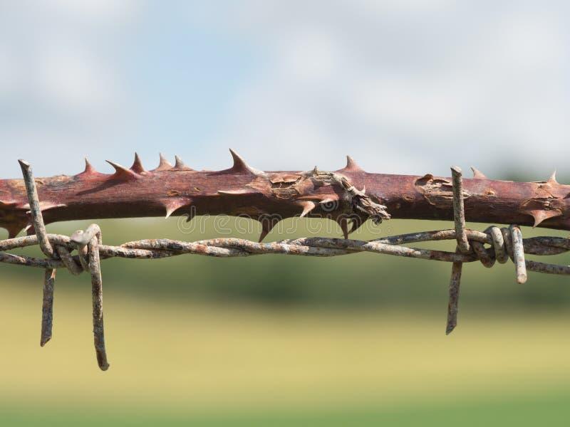 Drut kolczasty naturalny i przemysłowy - zdjęcie stock