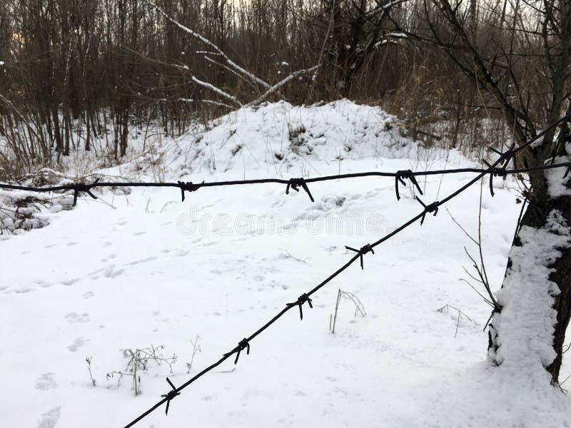 Drutu kolczastego ogrodzenie jest przeciw tłu zima las obrazy royalty free