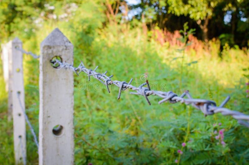 Drutu kolczastego ogrodzenie w porosłej roślinie zdjęcie stock