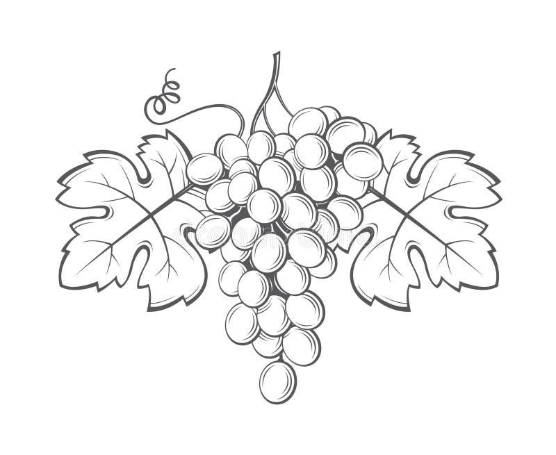 Druvagruppbild royaltyfri illustrationer