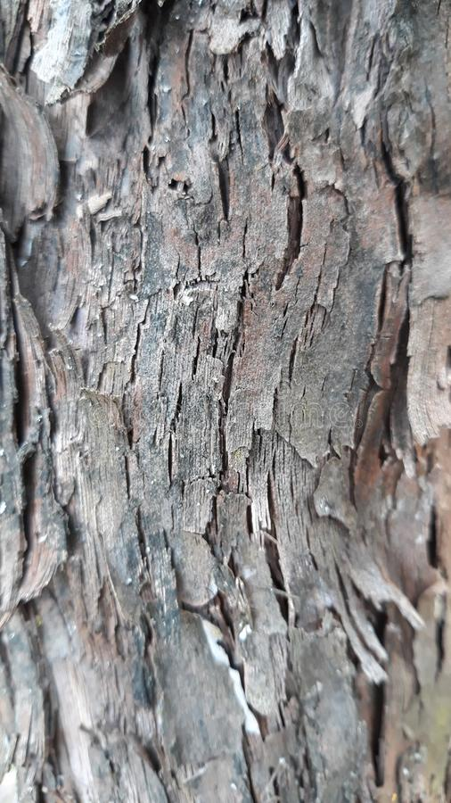 Druvaskällträd royaltyfri foto