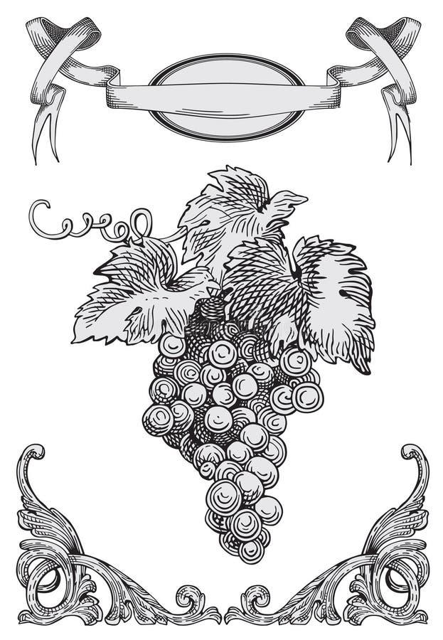druvavektor stock illustrationer