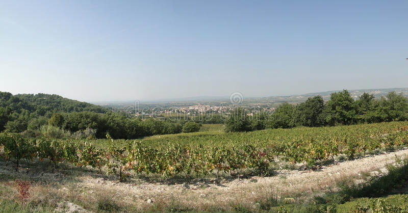 Druvavines och vingårdar royaltyfria bilder