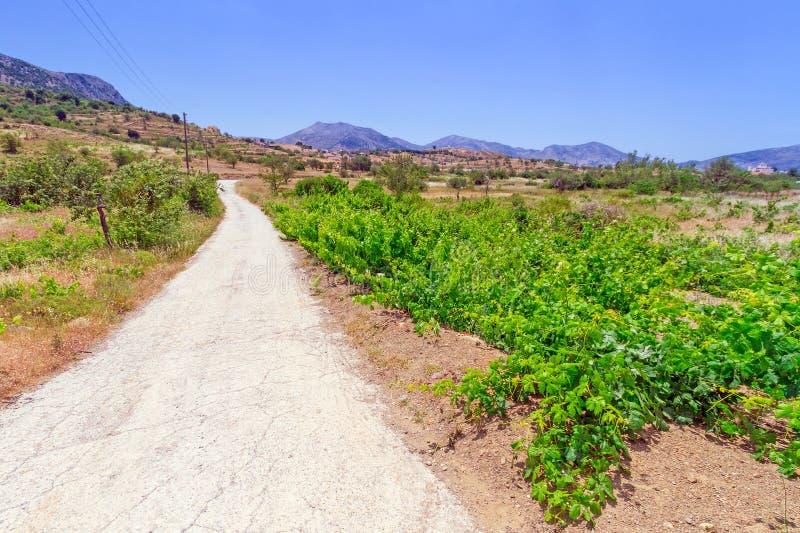 Druvavingård i landskap av Crete royaltyfri foto