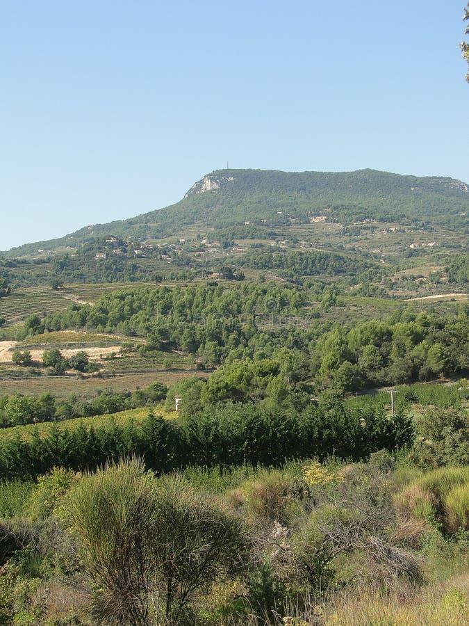 Druvavinrankor i vingård med Mont Ventoux arkivbilder