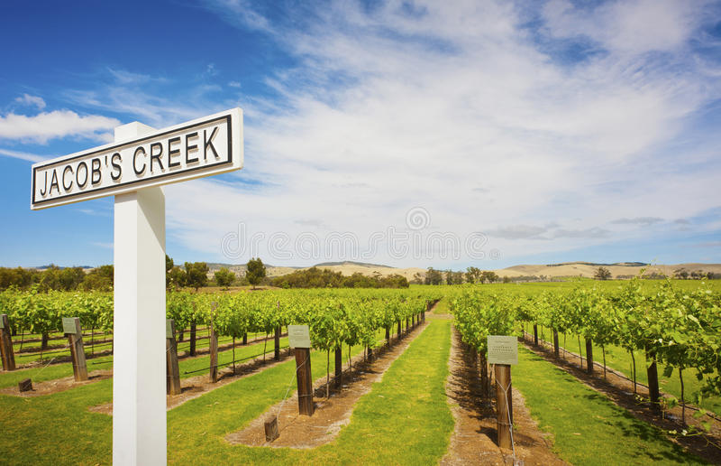 Druvavinrankor på Jacobs Creek Winery arkivfoto