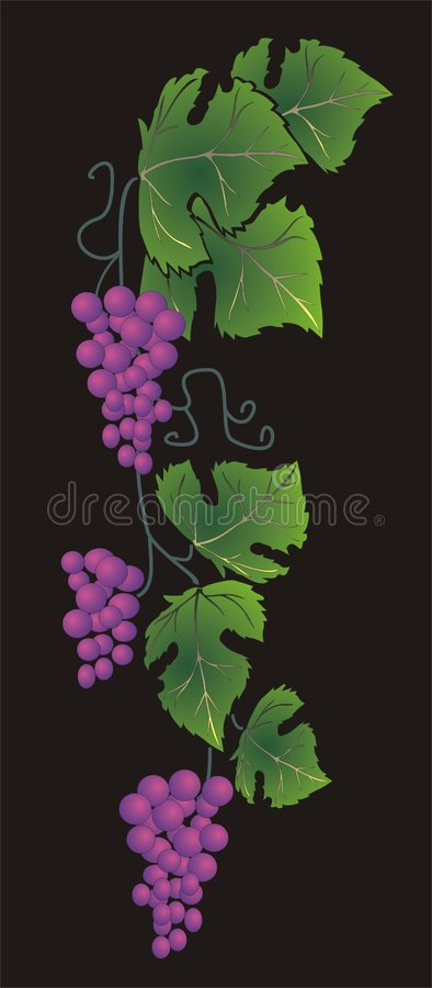 druvor stock illustrationer