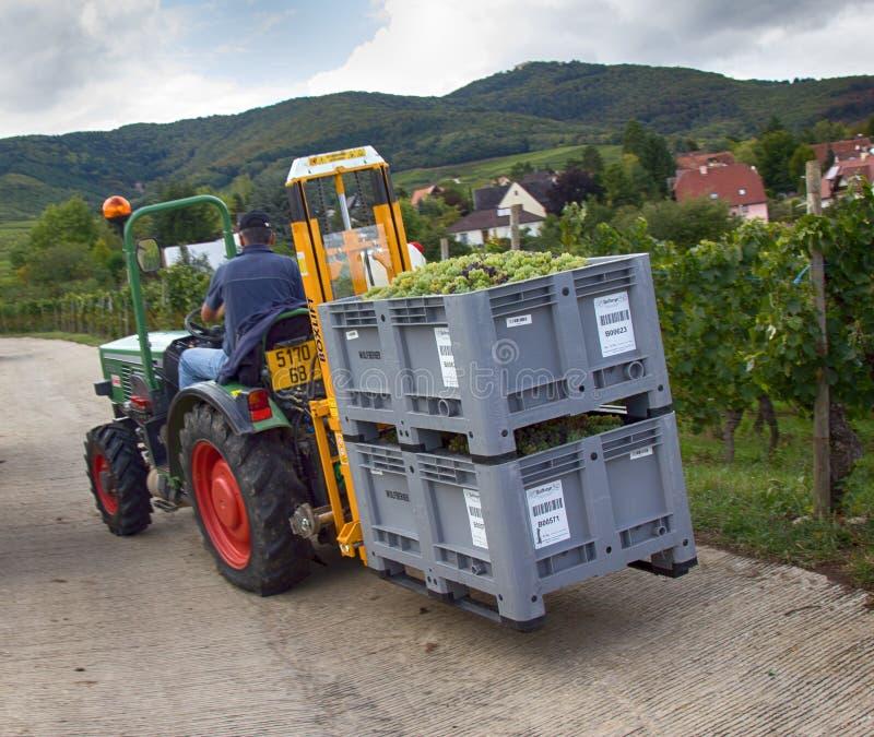 druvor manuellt med bruket av traktorer för trans. royaltyfri fotografi