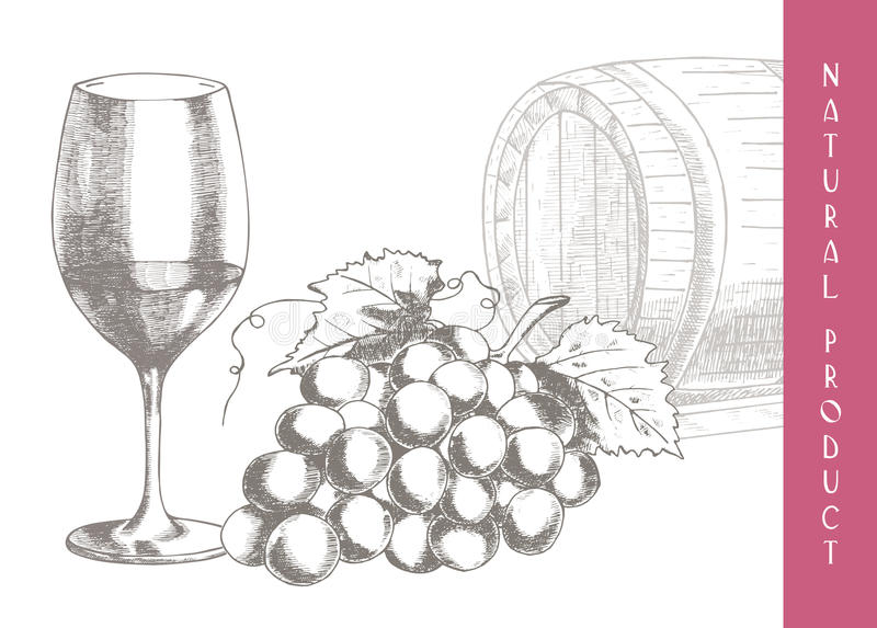 Druvor och wine royaltyfri illustrationer