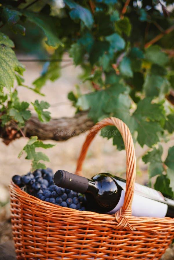 Druvpackning med en flaska vin på vingården arkivbilder