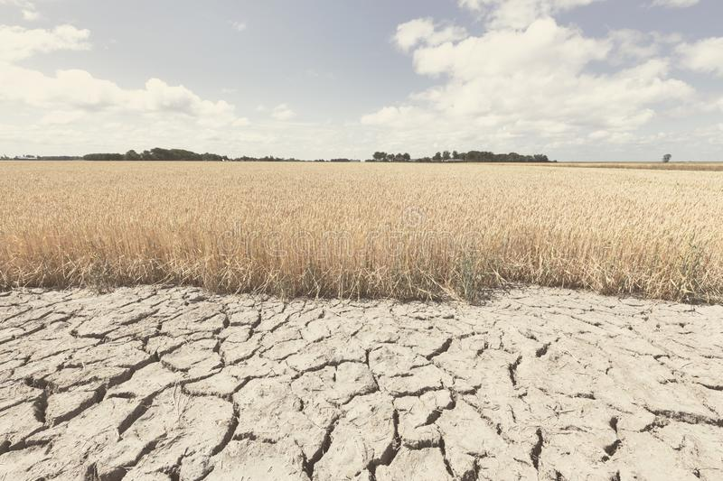 Dry and arid land with failed crops due to climate change and global warming royalty free stock photography