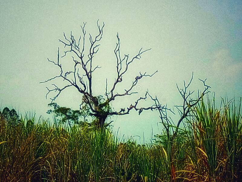 Dry, arid, trees, sky, fields stock images