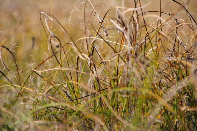 Dry autumn grass in the field stock image