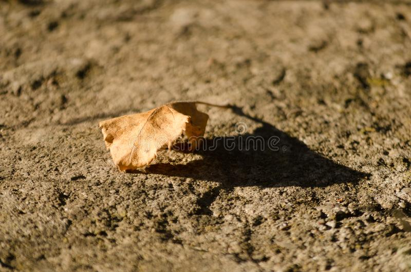 Dry autumn leaf ont the ground. The first sign of autumn arrival royalty free stock photo