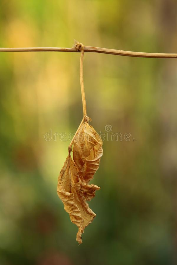 Dry autumn leaves brown and yellow colors. stock photos