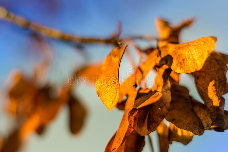 Dry autumn leaves royalty free stock image