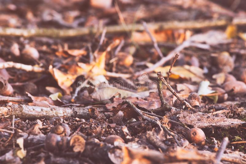 Dry autumn leaves on the ground. Autumn background royalty free stock image
