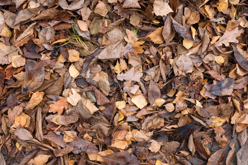 Dry autumn leaves in orange and brown colors. Close-up. Dark autumn background. stock photo
