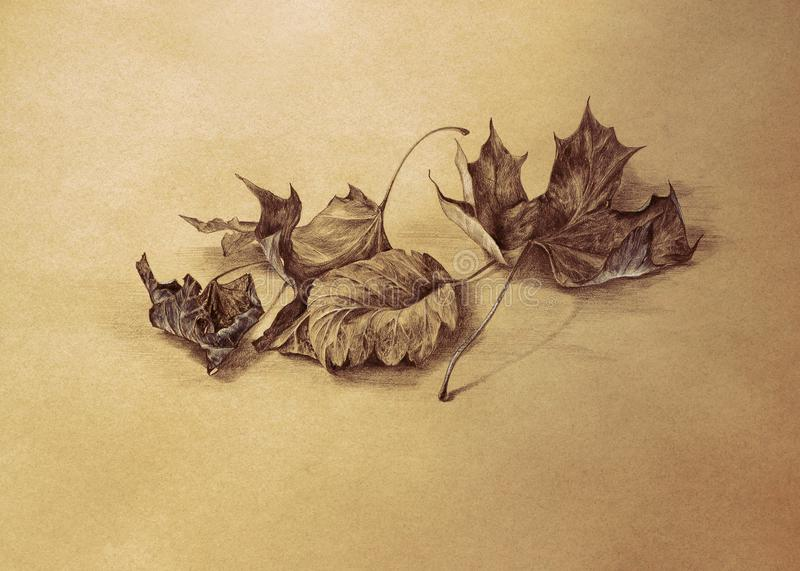 Download dry autumn leaves pencil drawing background stock illustration illustration of sketch botanical