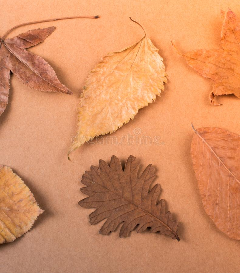 Dry Autumn leaves on a wooden panel texture stock photo