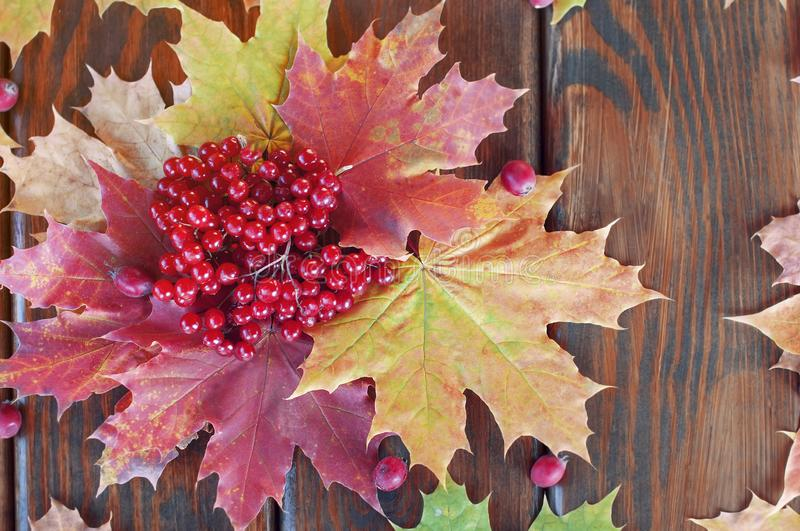 Dry autumn maple leaves of different colors with bunches of red viburnum berries  and scattered hawthorn berries lie on a wooden stock image