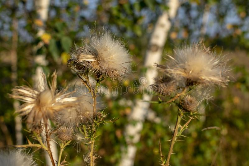 Dry autumn plants royalty free stock photography