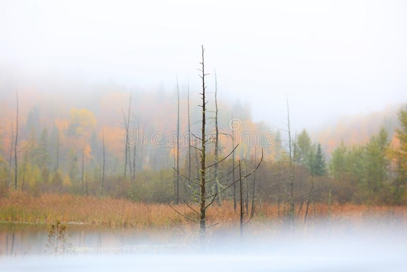 Dry autumn trees caught in fog stock photo