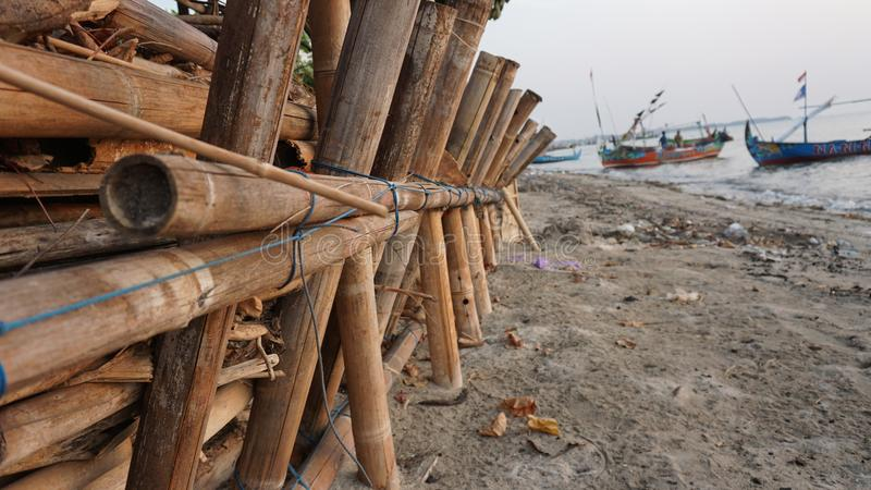 Dry bamboo on the beach, to withstand sea water abrasion royalty free stock image