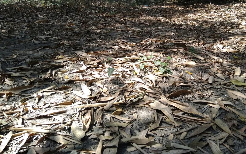 Dry bamboo leafs on earth surface playing with light,dry leafs,. Dry bamboo leafs on earth surface playing with light,dry royalty free stock photo