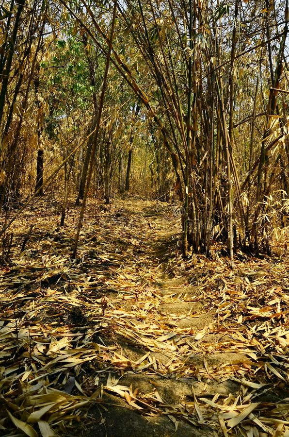 Dry Bamboo leaves that fall on Bamboo forest  in Phutoei National Park  , Suphan Buri , Thailand royalty free stock photos