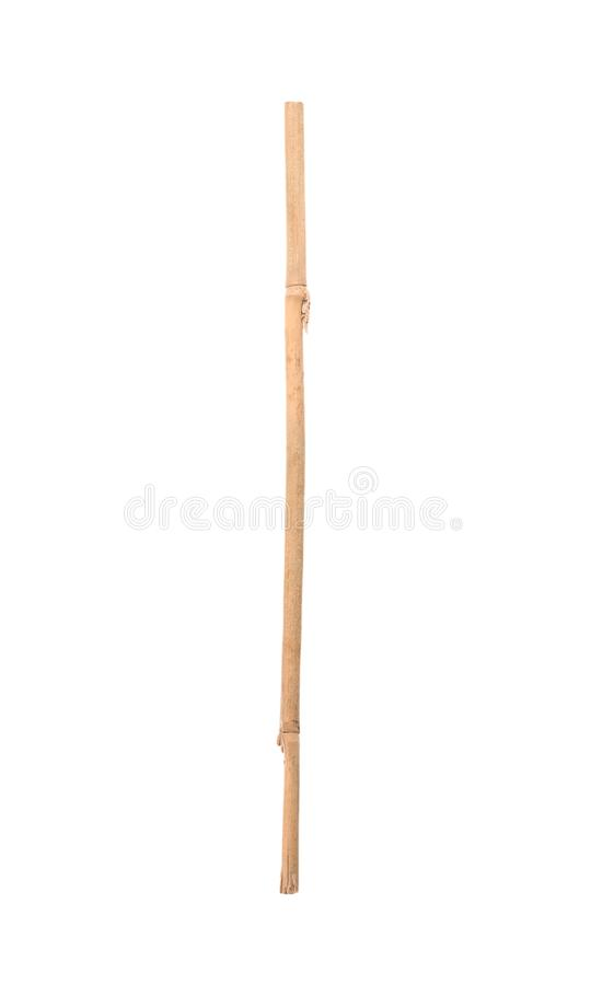 Dry bamboo stick. On white background royalty free stock images