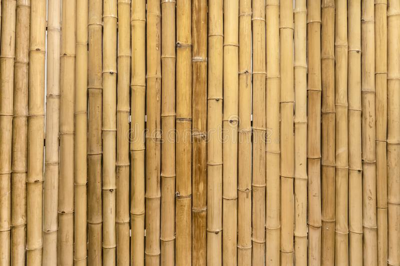 Dry bamboo wall mural would make a great natural wallpaper design, and could even work as a repeating pattern to create an orient stock image