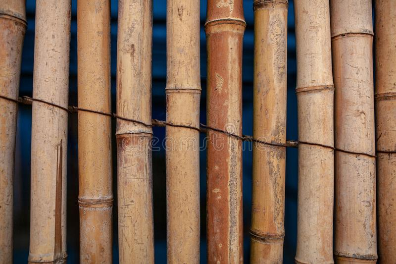 Dry Bamboo Wall tied with rope Texture Background,Bamboo fence background,Bamboo stick pattern.  stock photo