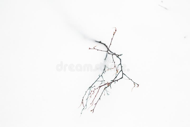 Dry branch fallen in white snow royalty free stock photography